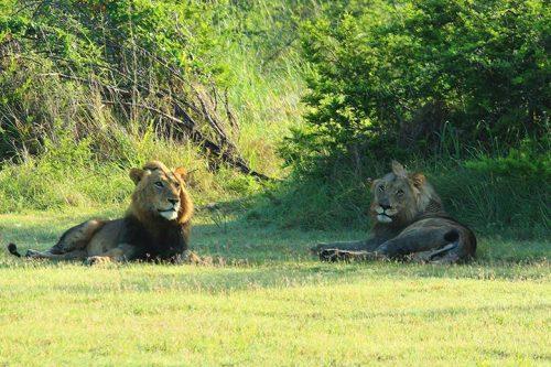 Uganda primates watch